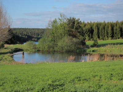 Pohled na Horní žišpašský rybník v pozadí