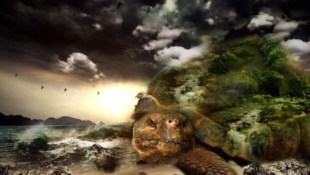 turtle-564733_640