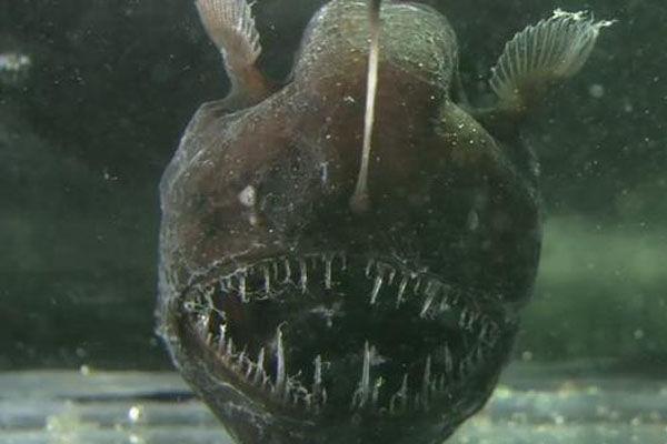mořský ďas- sex mezi zvířaty