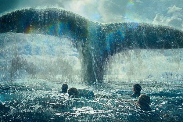 sex mezi zvířaty- velryby