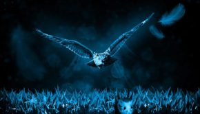 owl-517497_960_720