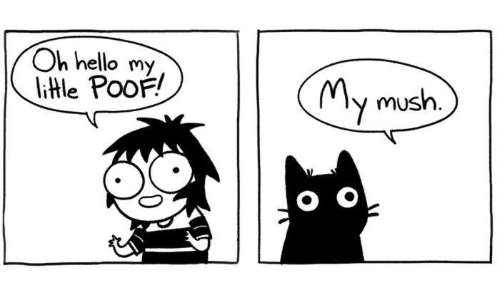 Kočky útočí